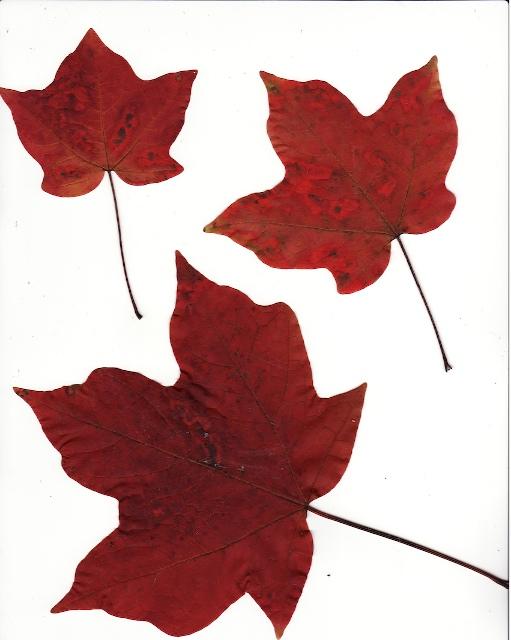 Leaves08