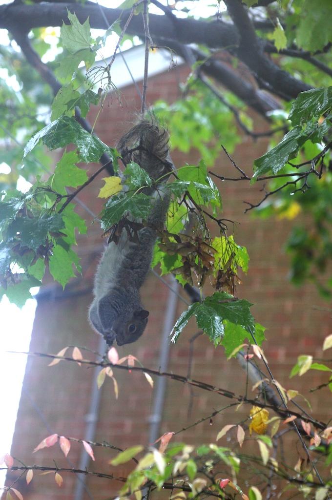 Weirdsquirrel (1)