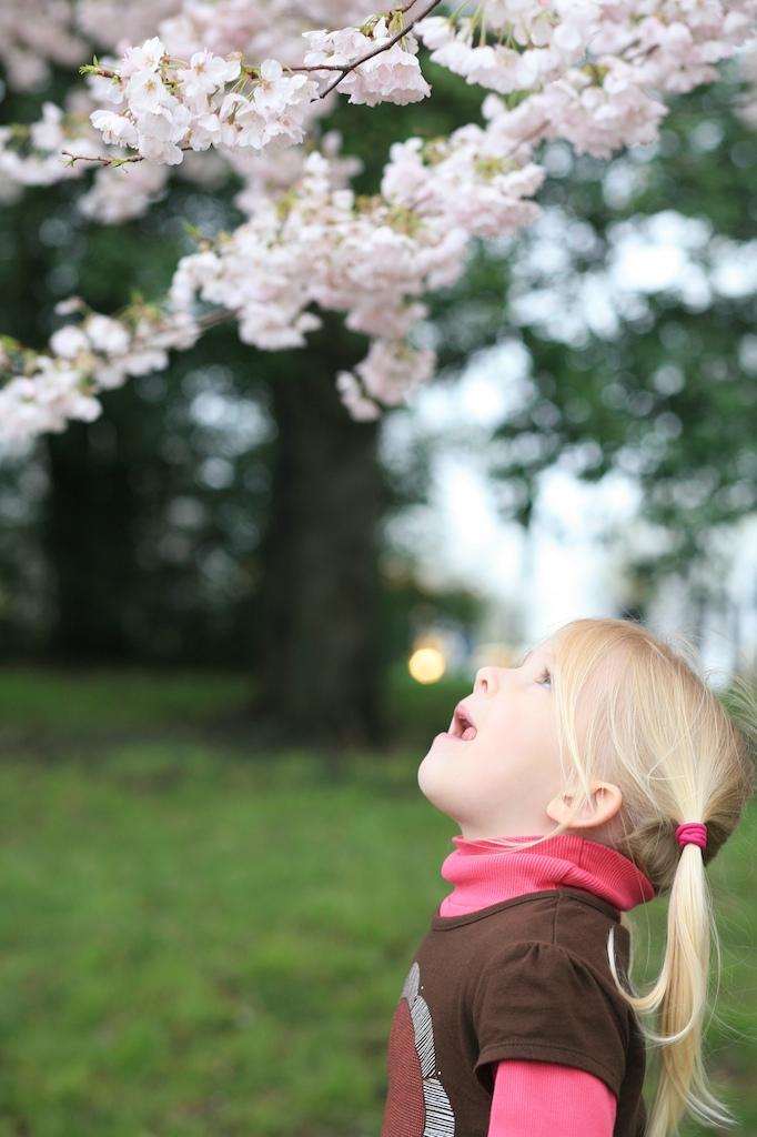 Gracie cherry blossoms