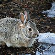 Yard Bunny | 2.16.11