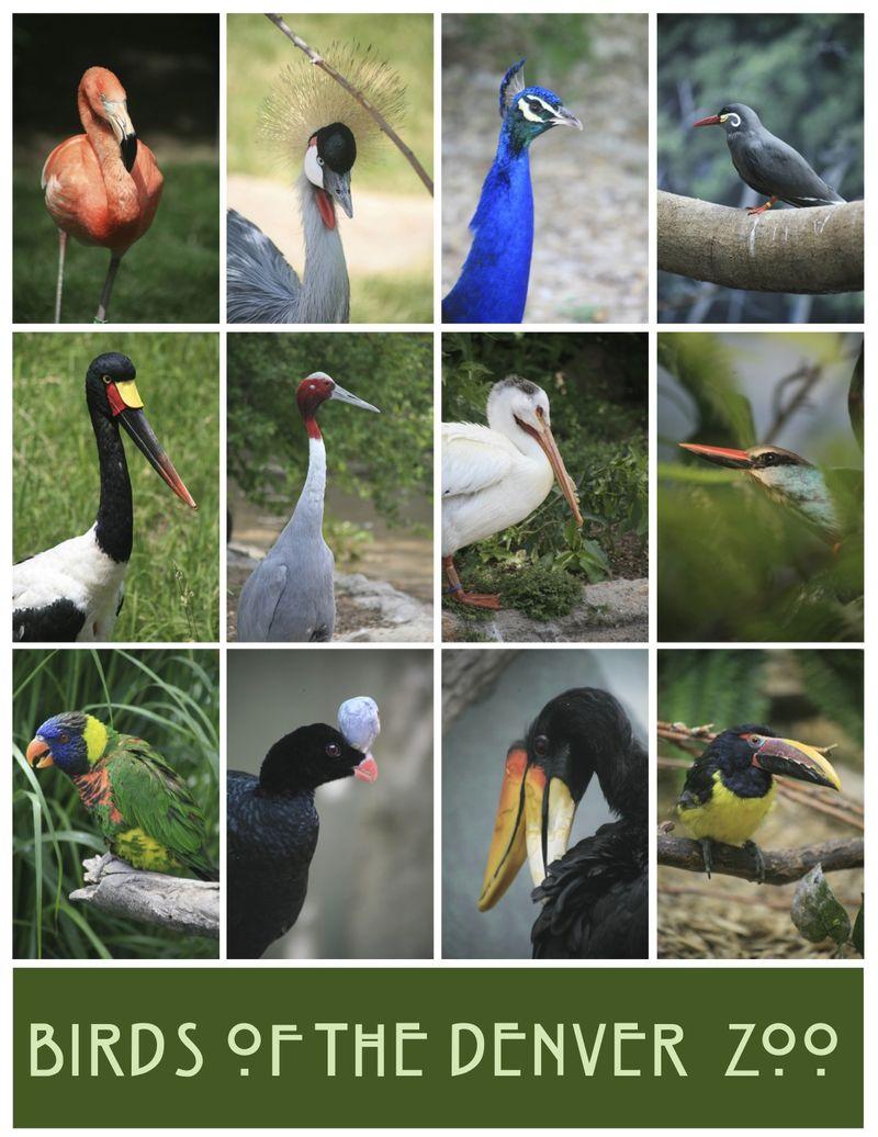 Birdscollage