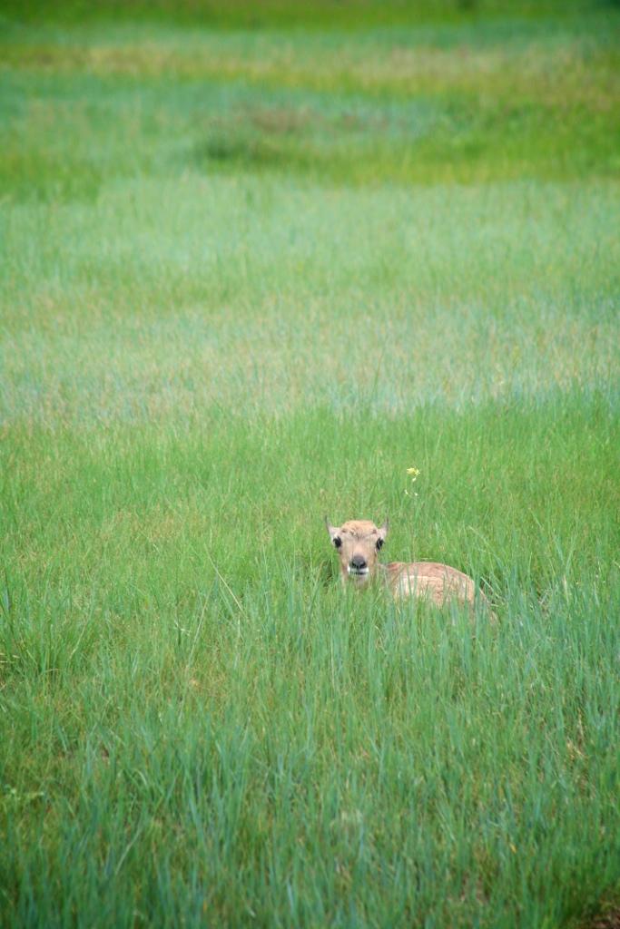 Antelopebabies (2)