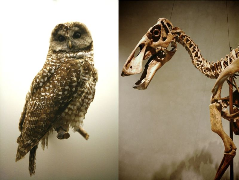 Owls+dinosaurs