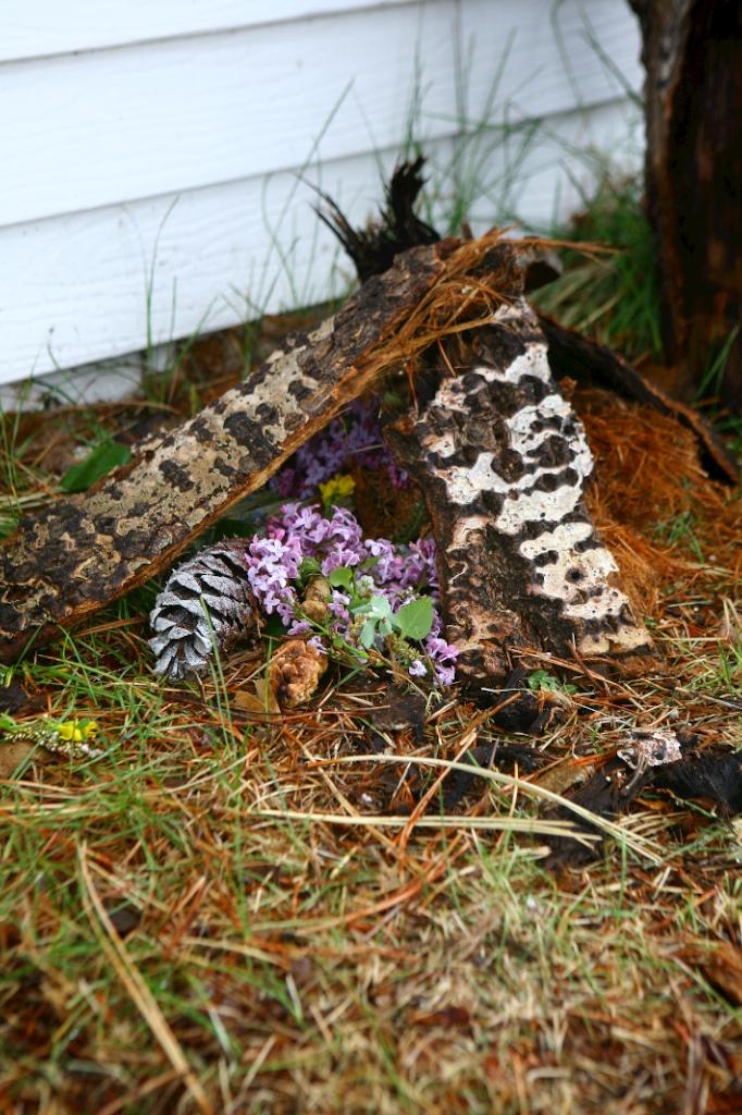 Butterflynest