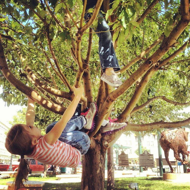 Monkeysintrees