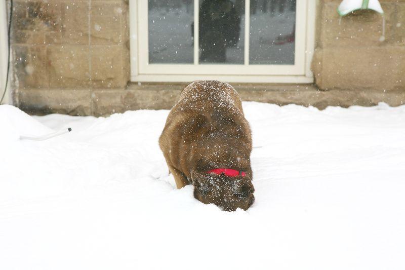 Snowday (4)