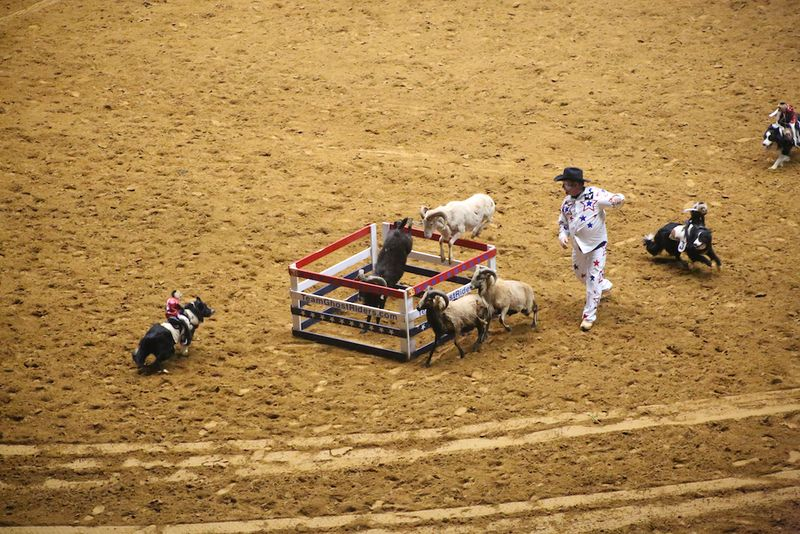 SLE Rodeo 5