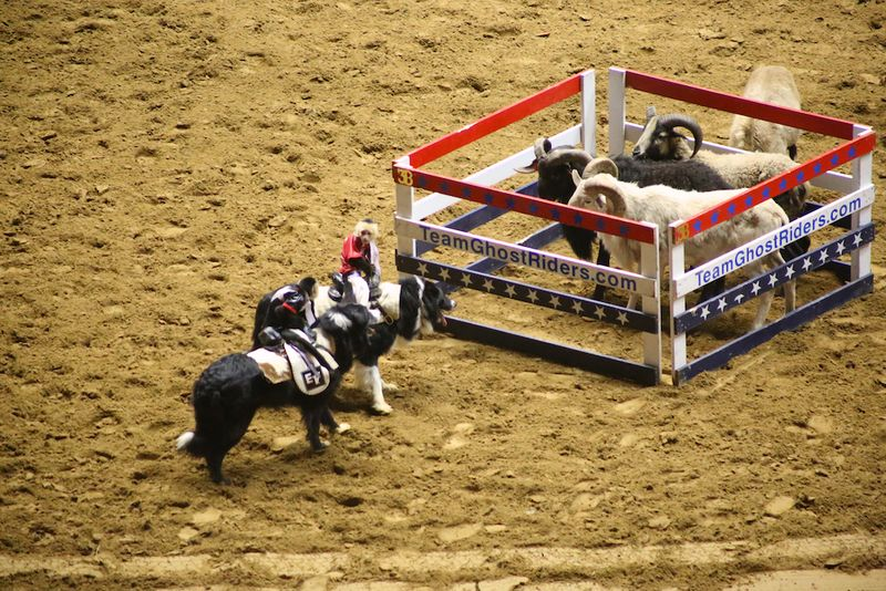 SLE Rodeo 6
