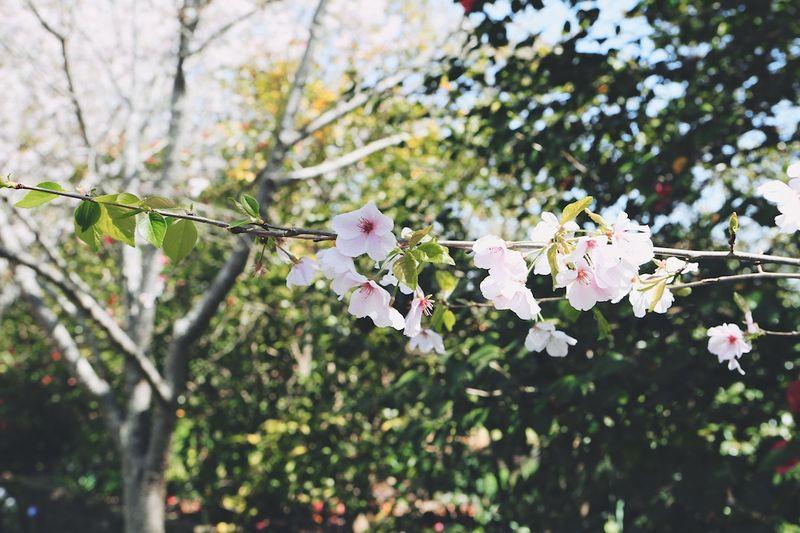 Spring2015 (4)