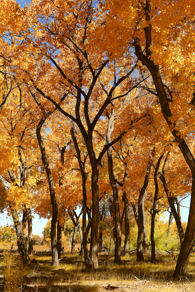 New Mexico Fall (1)