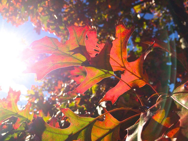 New Mexico Fall 7