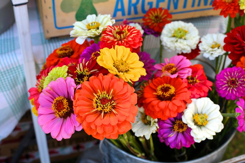 Downtown Growers' Market 3 (1)