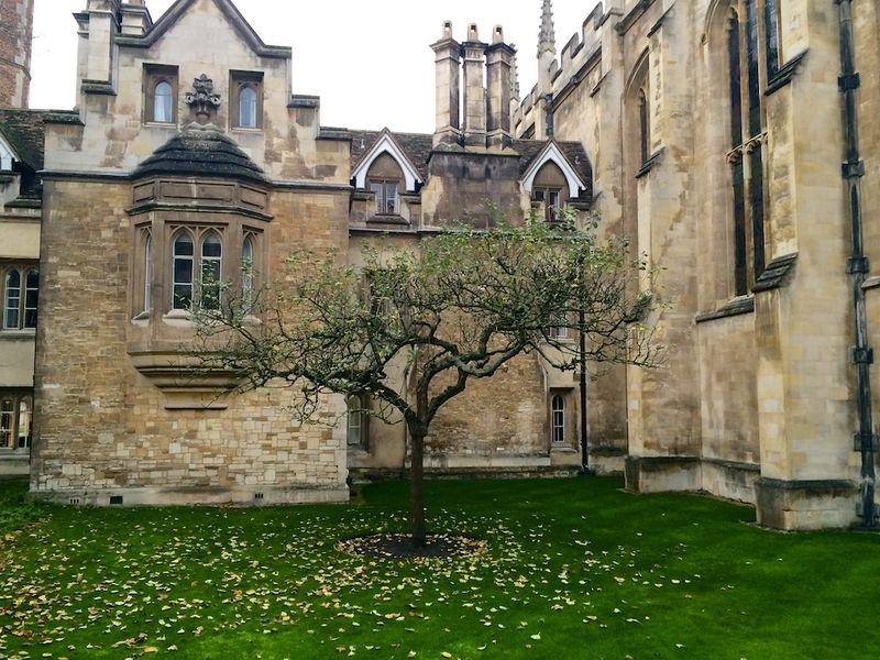 Sir Isaac Newton tree