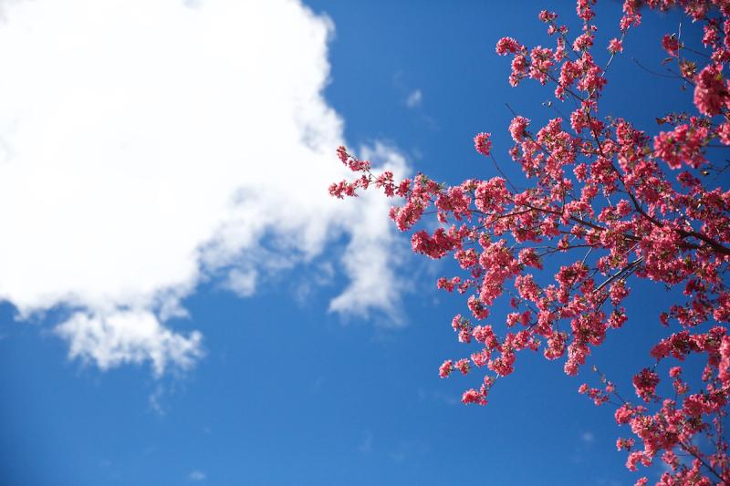 20th tree (1)