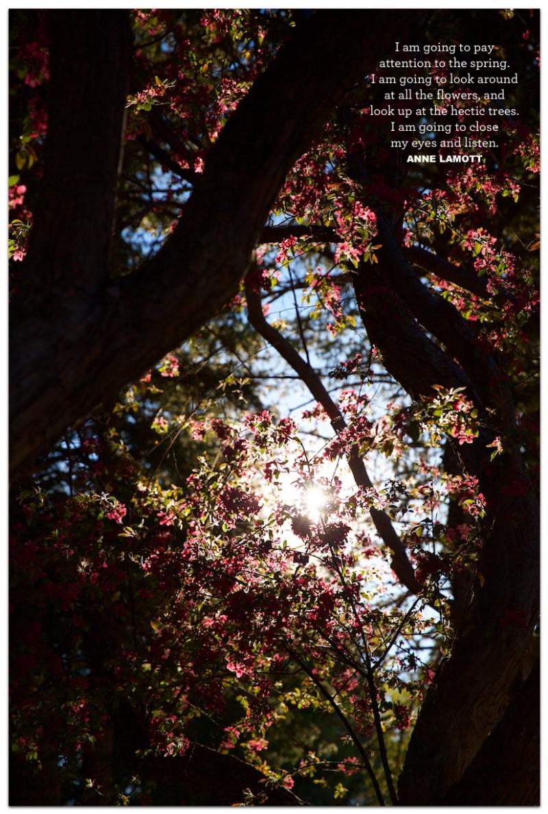Hectic Trees