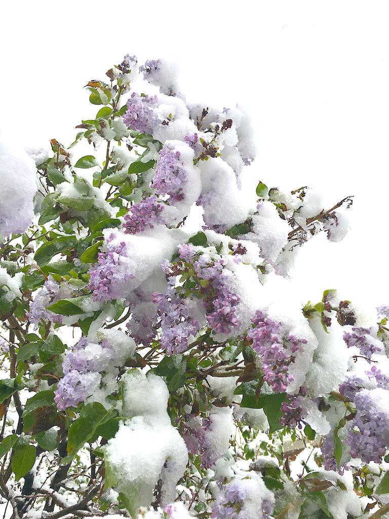 May snow 4