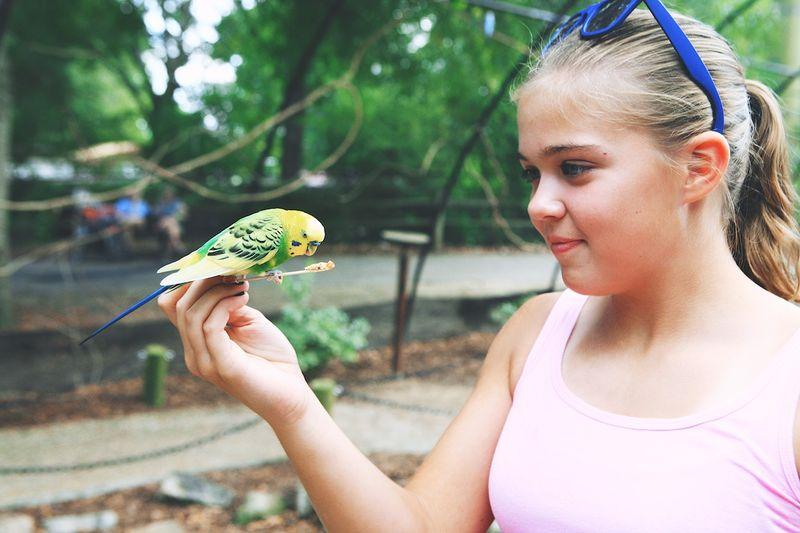 Zoo2014