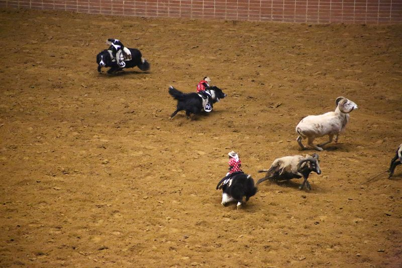 SLE Rodeo 4