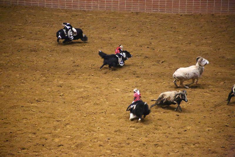 SLE Rodeo 4