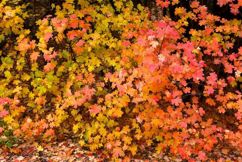 New Mexico Fall (5)