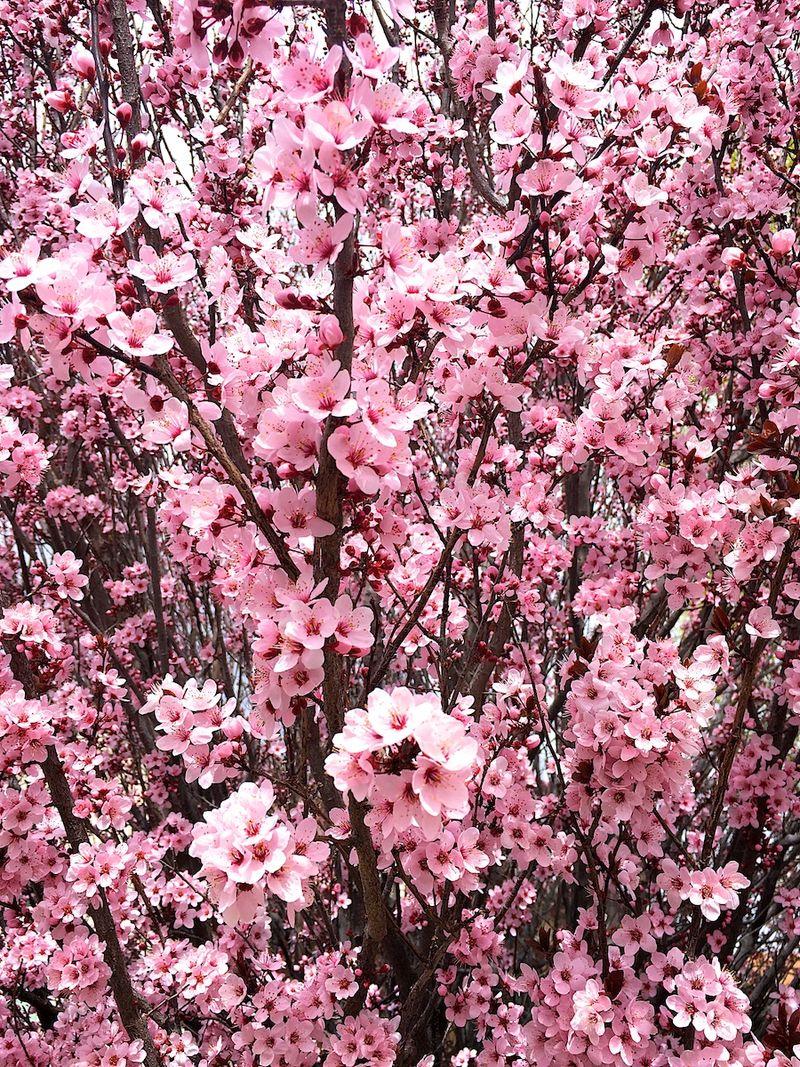 Spring 6