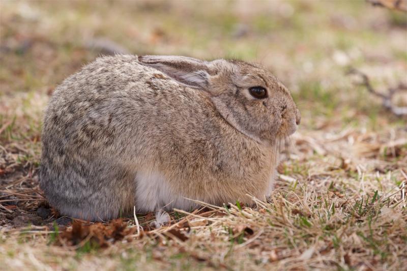 Yard bunny March