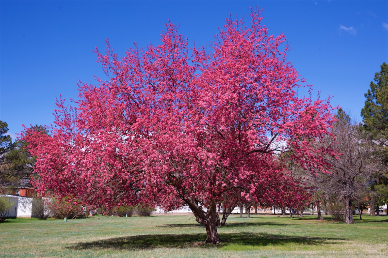 20th tree (2)