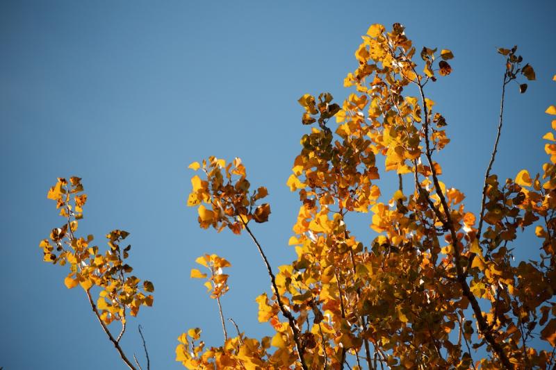 October 1 (1)