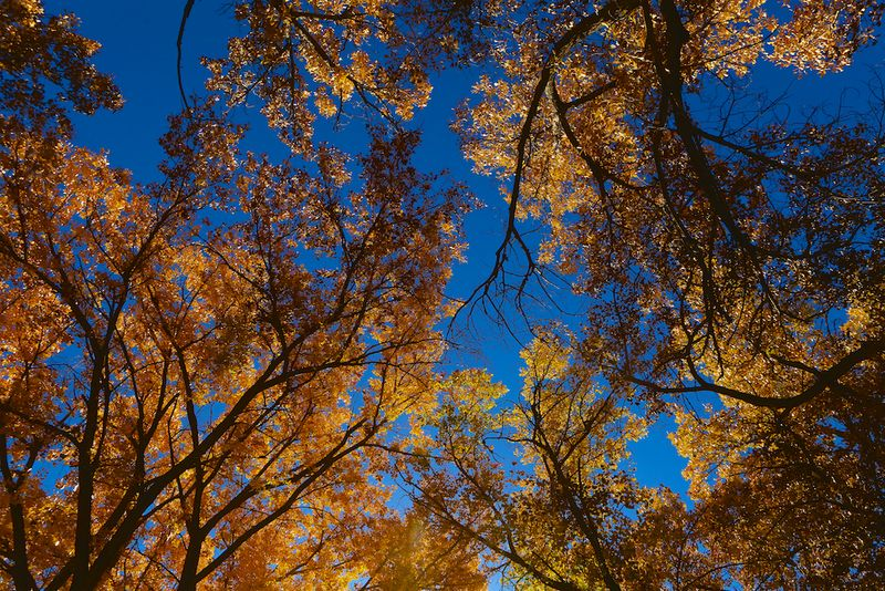 New Mexico Fall (2)