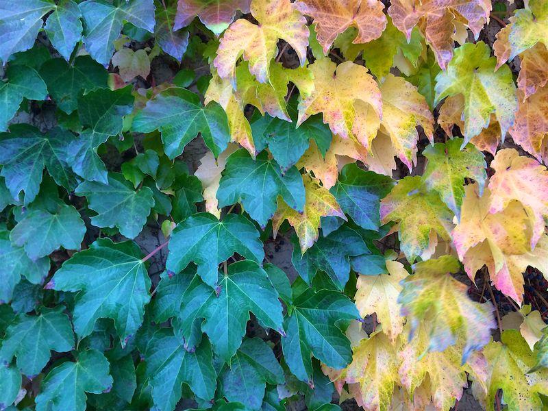 New Mexico Fall 1