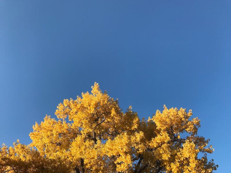 October 9 (1)