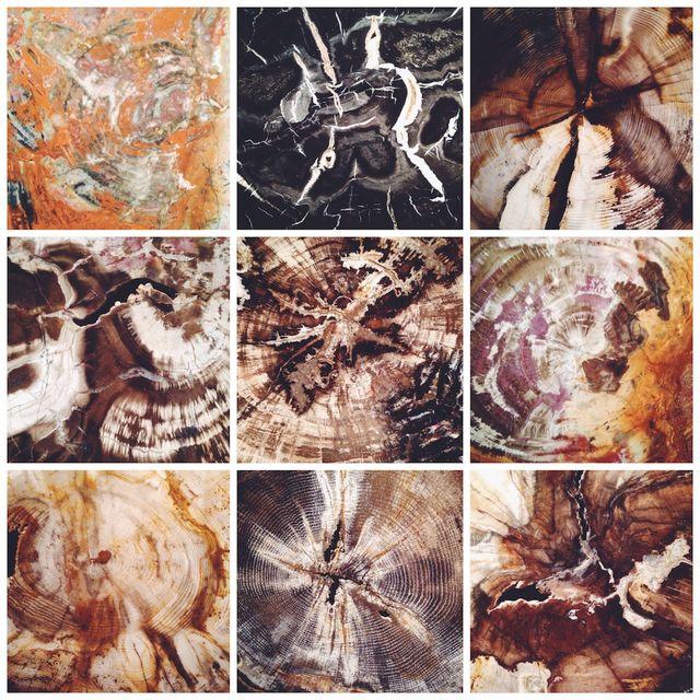 9/52   Petrified Wood Collage