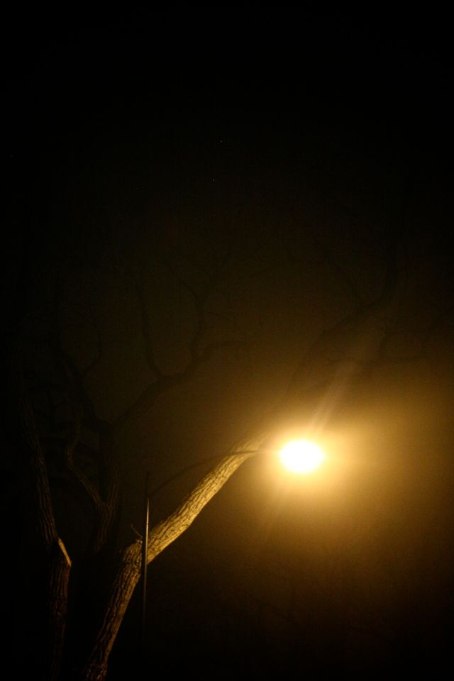 The Fog Before the Storm | 1.30.11