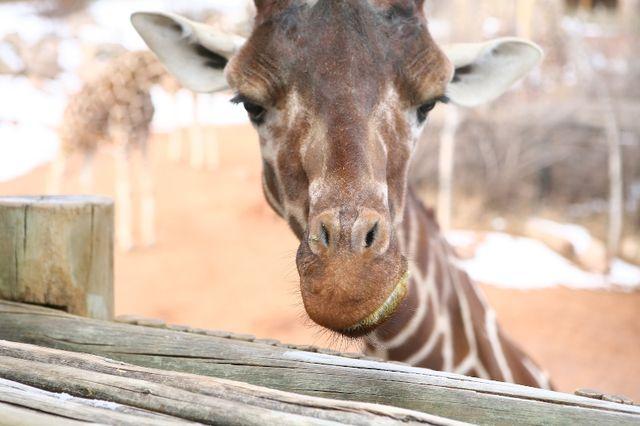 Helloooooooo Cheyenne Mountain Zoo!