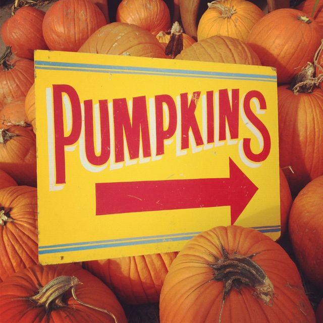 Grant Farms Pumpkins