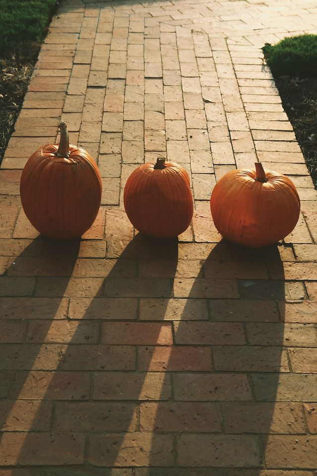 Fall Shadows