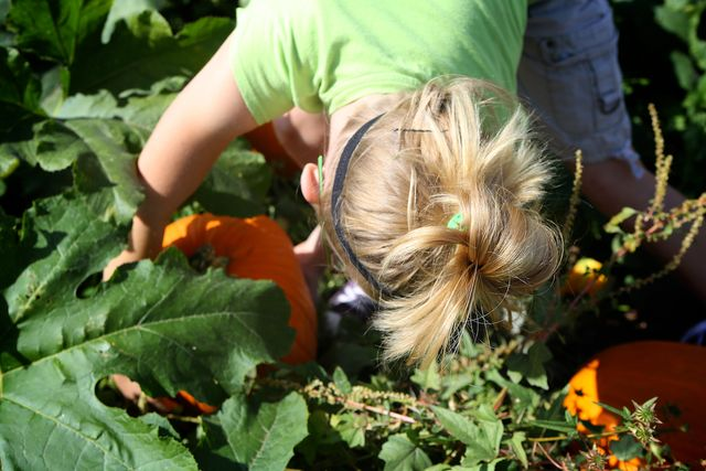 In Search of the Perfect Pumpkin, aka Serious Business