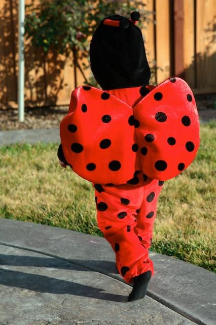 Ladybug3_1